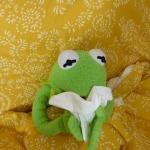 Kermit verschnupft